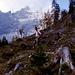 Im Anstieg durch das Johannes-Tal zum Karwendelhaus.