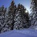 Impressionen Schneeschuhtrail Chänelegg Mürren, by Bachi
