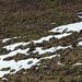 Reste von Züri Oberländer Schnee