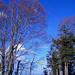 Höchhand – blauer Himmel und schöne Baumwipfel