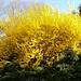Botanische Begrüssung in La Heutte