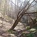 weglos durch den Wald