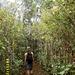 """Pfad zum """"Mont Piton"""" durch dichten Wald"""