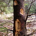 MUNCA CIOCANITORII/woodpecker's work