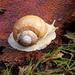 melc,melc....codo..../snail....