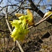 auch die Bäume verspüren den Frühling