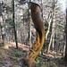 die längere Waldpassage nach Lamboing ist mit einem Skulpturenweg ausgestattet