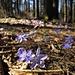 Der Frühling erblüht