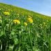 Grün-gelbe Jurawiesen