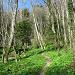 Pfädchen durch Bärlauchwälder