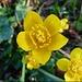 Frühlingsbote I