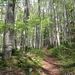 Frühlingswald oberhalb von Berschis