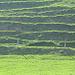 konstrastreiche Grüntöne auf dem Grashügel