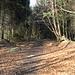 Der bewaldete Hombriggipfel