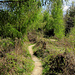 Auf dem Weg Richtung Baldegg, heute sehr trocken, bei Feuchtigkeit ist es hier eher sumpfig.