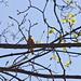 Vogelgezwitscher in den Bäumen über mir