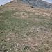 Mäggisserehore, etwa auf 2000m, der Schnee ist wohl noch nicht so lange weg, viele Krokus