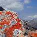 Typisch für den Niesengrat, rote Flechten (Mitverantwortlich ist da Vogelkot, meistens an idealen Landeplätzen) im Hintergrund Niesen, Tschipparällenhore