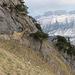 Durchschlupf West Bogartenfirst, auf Höhe Bogartenlücke: Entweder links im Fels III oder rechts im Steilgras T6