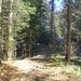 Das nette schattige Steiglein im Wald.