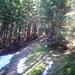 Und wieder im Wald.