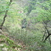 Rododendri a 600 metri. Al centro si intravede il Rio Cavaglio