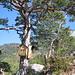 Lauschiges Ambiente auf dem Gipfel der Bütziflue - die Stockflue schaut rechts hinter dem Baum hervor<br /><br />