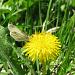 Ständige Begleiter: Schmetterlinge...