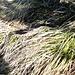 tiefschwarze Schlange beim Abstieg vom Galgenstangenkopf - kennt jemand die Art?