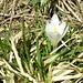 Frühling jetzt auch im Karwendel