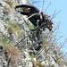 Wunderschöne Kletterei            [http://www.matthias.hikr.org Home]