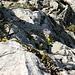 Blumen in der Felswand