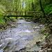 m Mutzbachgraben: unverbautes, sauberes Fliessgewässer