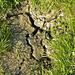 Der Boden ist sehr ausgetrocknet