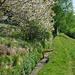 Blühende Kirschbäume am Niwärch. Vorrichtung zum Einsetzen der Wässerplatte.
