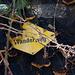 Die Rückeroberung: Brombeeren und Pilze überwuchern die Wegmarken