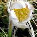 Langsam spriessen auch die Anemonen aus dem kargen Frühlingsboden.