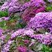 Hübsch angelegter Steingarten in Blatten