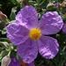 Spezielle Blüten...irgendwie zerknittert...