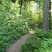 Waldweg Richtung Höngg