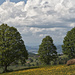 Schöne Baumgruppe oberhalb von Faltschen