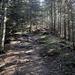 Weg ab Harder Kulm durch den Wald