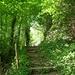 Schön sattes grün der Hecken hier im Tal.