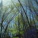 Frühling und blauer Himmel