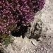 Munggenloch mit Blumenterasse