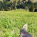 Viel Grass, aber nicht rutschig