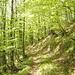 La foresta rinnovata
