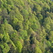Frühlingswaldmuster...