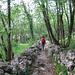 Nei pressi di Valmadrera il sentiero corre fra muretti a secco ben conservati.