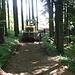...verdichteter Waldboden - eine neue Forststrasse wird gebaut